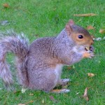 Un meraviglioso scoiattolo