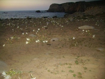 La Punta di Capo Pecora al tramonto