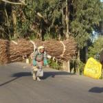 Donna con fascie di legna