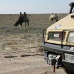 Cammelli lungo la strada del Kazakistan
