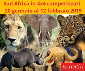 sud-africa-banner